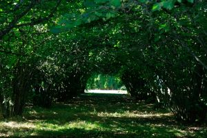 Orchard Arches Stock by Moonchilde-Stock