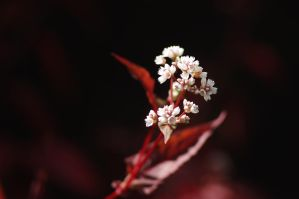 Flower in the dark by Winstein