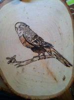 Wood Burned Parakeet by Wytchdocta