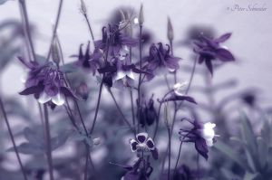 Shades of purple. by Phototubby