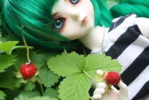 wild strawberries by iigo