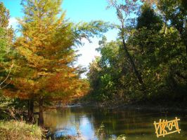 Leaves changing by a creek by semie