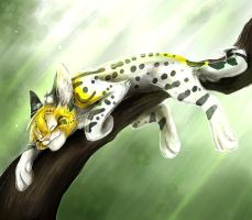 Catnap by Silver-Serval
