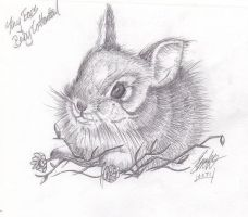 Baby Cotton Tail by SnowELDS