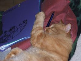 My cat doing his homework by jasminlucie