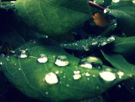 Droplets by GERARDwayFORlife