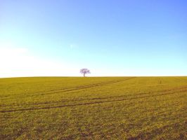 Lonely Tree by beltyboy