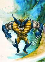 Wolverine by daawg
