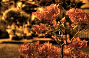 HDR Flower by thechevaliere