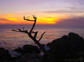 Point Lobos Sunset by ravenn22