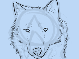 Wolf Sketch by Horse-Emotion