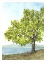 Olive Tree Painting by aakritiarts