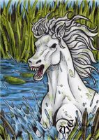 Kelpie Sketch Card - Classic Mythology II by tonyperna