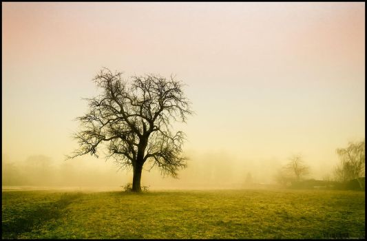 Tree by airglow