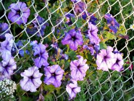 Flowers in the Fence by AtomicBrownie