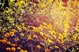 Sunset Flowers by AnnaGreer