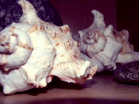 She Sells Sea Shell... by CloudyCosmos