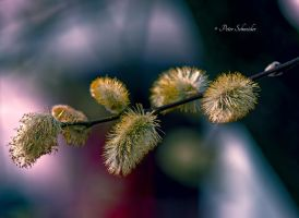 Tender unfolding by Phototubby