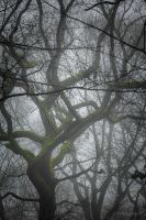 Whispering trees by dominique-merot