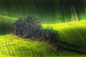 -Shadowplay on island- by Janek-Sedlar