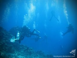 Divers all around you by nicoleYaro