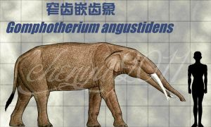 Gomphotherium angustidens by sinammonite