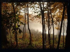 Foggy Trees by BlueArctic4