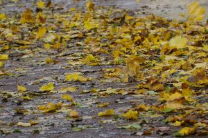 Leaves Blowing by organicvision