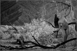 Burnt Woods in Death Valley by Magicc-Imagery