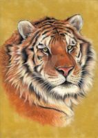 Tiger pastel portait by Raksha-the-Demon