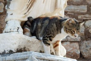 Ephesian kitty 2 by wildplaces
