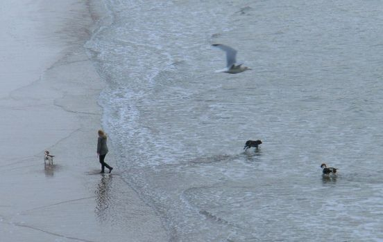 a girl, three dogs and a gull by nonyeB