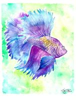 Betta fish watercolor by jupiterjenny