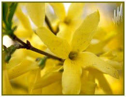 Colors of Sping: Yellow by MichaiMathieu