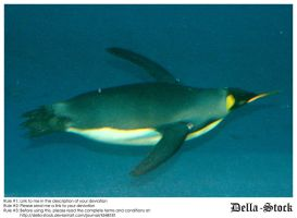 Sea World: Penguin Underwater by Della-Stock