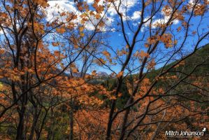 Through the Orange Leaves by mjohanson