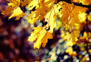 Colours of autumn by ladyang