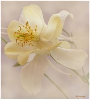 Columbine 1 by Deb-e-ann