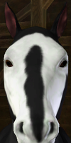 Sims 3 Horse Marking Download: BadgerBlaze1 by Isolated-Design