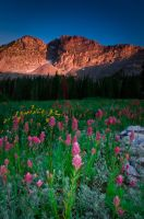 Albion Basin Wildflowers III by mikewheels