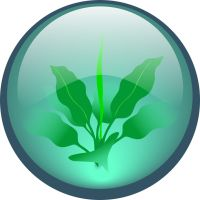TI LEAVES by vancegraphics