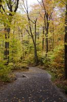 White Mountains  Fall Foliage  055 by FairieGoodMother