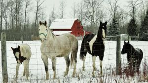 Out In the Cold by TearsofEndearment