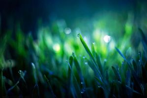 morning dew III by amsterdam-jazz