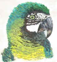 gouache macaw by like-textas
