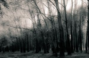 Mystic forest by airsteve