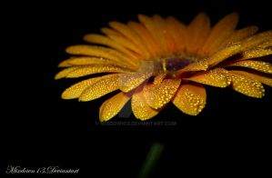 Yellow droplets_2 by Mixdown13