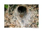 Grass Spider by butterfly36rs