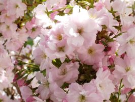 pink spring by LiaDeBeaumont