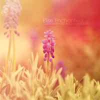 Lavender dreams by EliseEnchanted